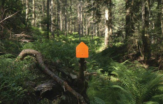 Zwitscherbox Forest Oranje