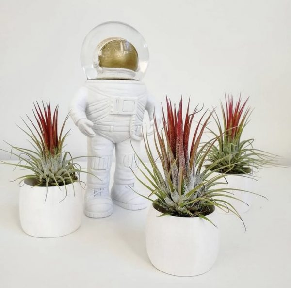 Summerglobe glitter astronaut sneeuwbol Neil donkey